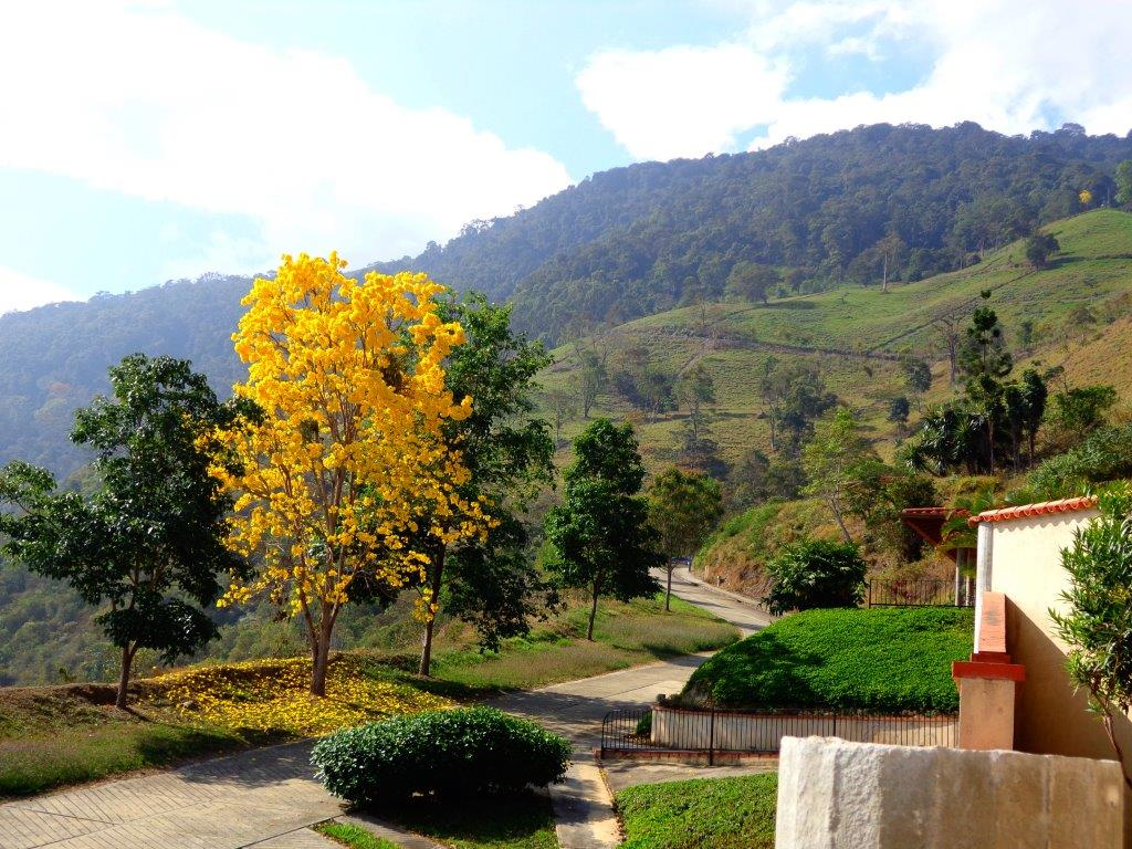 Los Andes (12)