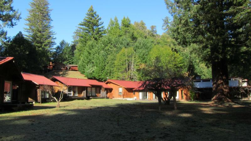 redwoods_01