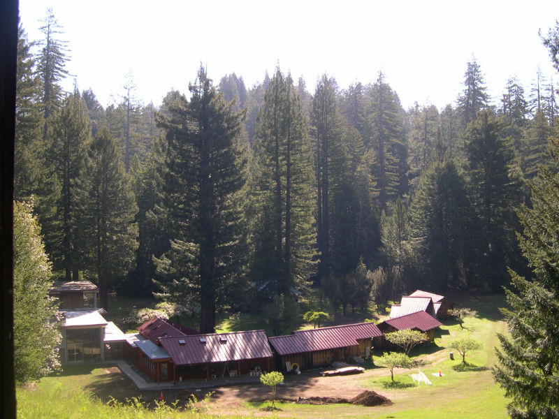 redwoods_02