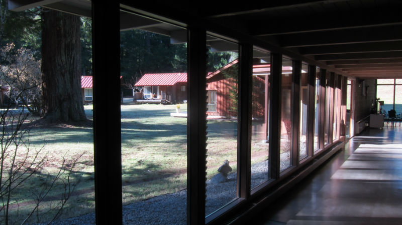 redwoods_03
