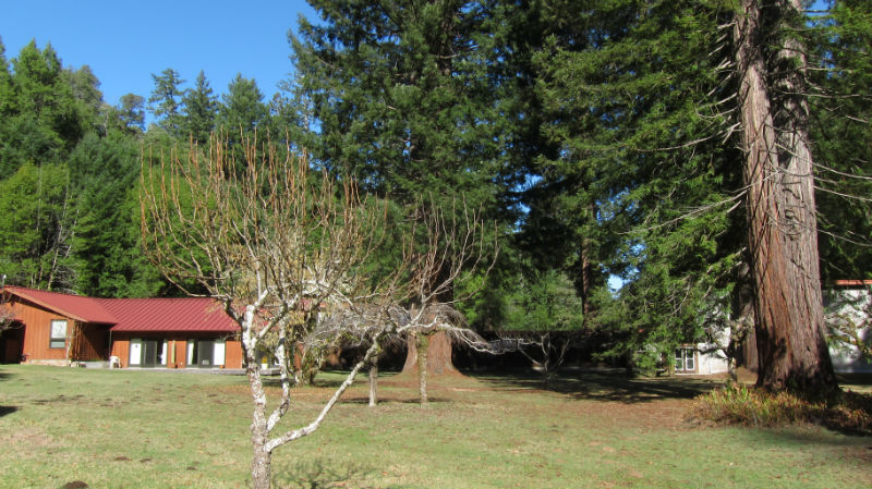 redwoods_05