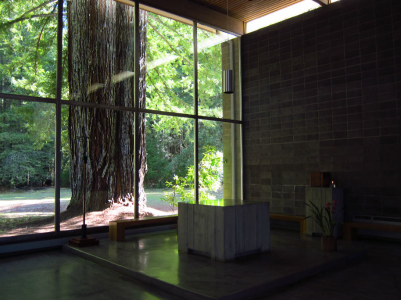 redwoods_07