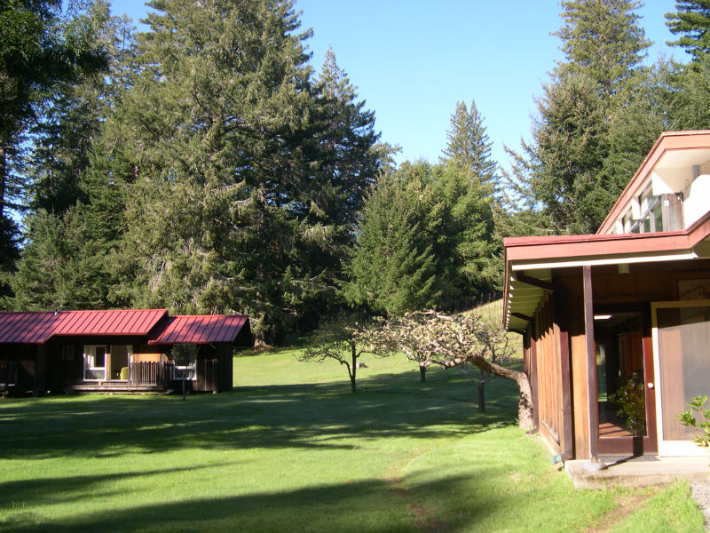 redwoods_10