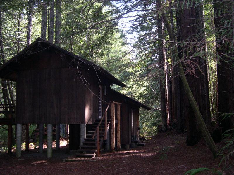 redwoods_11