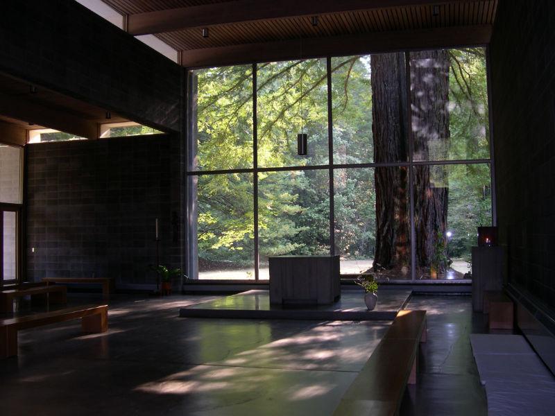 redwoods_14
