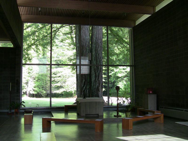redwoods_19