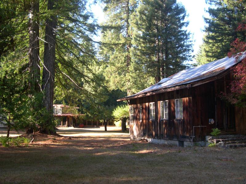 redwoods_21